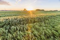オーストリア 草原と朝日