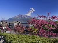 鹿児島県 仙巌園と桜島噴煙