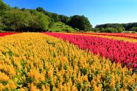 日本 埼玉県 国営武蔵丘陵森林公園