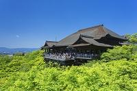京都府 新緑の清水寺本堂