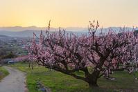 長野県 長野市 松代町 東条あんずの里より後立山連峰の夕景