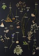 押し花の飾り