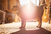 神奈川県 江の島 猫
