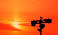 夕焼け空と一羽の鳥