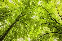セルビア ベオグラード カレメグダン公園 新緑