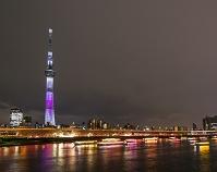 桜咲く隅田公園と東京スカイツリー 夜景