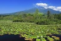 新潟県 イモリ池から妙高山
