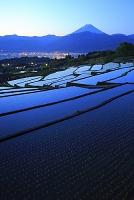 山梨県 夜明けの富士山と水が入った中野の棚田