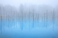 北海道 霧に煙る青い池