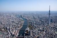 東京都 満開の桜の隅田川と東京スカイツリー