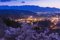 長野県 タカトオコヒガンザクラ咲く高遠城址公園と中央アルプス...