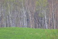 岩手県 宮古市 牧草地と新緑の林