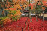 京都府 地蔵院(竹の寺) 参道の紅葉と山門