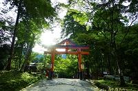滋賀県 日吉大社 山王鳥居