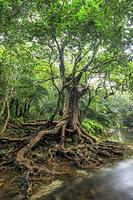 沖縄県 西表島のジャングル