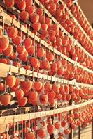 山梨県 干し柿