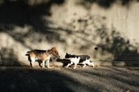 犬と猫の散歩