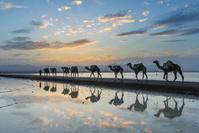 エチオピア ラクダの列