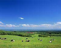 北海道・士幌町 十勝平野・士幌高原の牧場