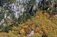 山梨県 カラマツの黄葉と瑞牆山