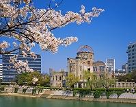 広島県・広島市 サクラと原爆ドーム(広島平和記念碑)