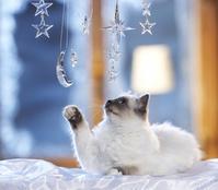 クリスマス飾りで遊ぶ猫