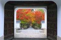 京都府 興聖寺 山門越しに見る琴坂の紅葉
