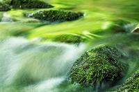 新緑の中の渓流