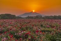 筑波山と日の出とポピー