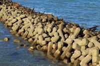 海辺のテトラポット