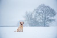 イギリス 犬