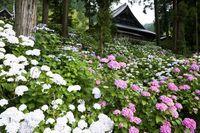 山梨県 妙法寺