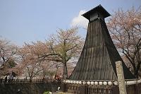 岐阜県 大垣の桜