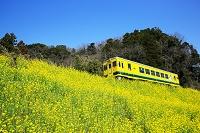 千葉県 夷隅郡 いすみ鉄道 いすみ352