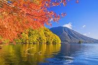 栃木県 紅葉の中禅寺湖より男体山(日光富士)朝景