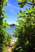 東京都 小笠原諸島 母島 南崎のクサトベラの道と鰹鳥島