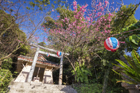 沖縄県 名護中央公園