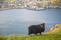 フェロー諸島の景観