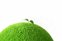緑の惑星に咲く新芽