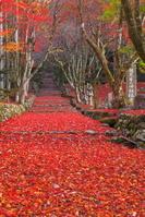 滋賀県 紅葉の鶏足寺