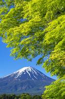 山梨県 富士山と河口湖畔新緑
