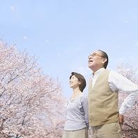 桜の花見をする夫婦