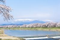 宮城県 白石川一目千本桜