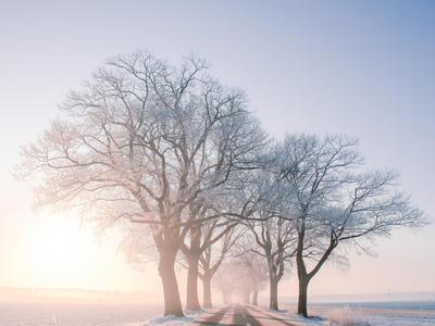 冬特集 - 冬のぬくもり。