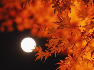 秋特集 - 豊かな秋。