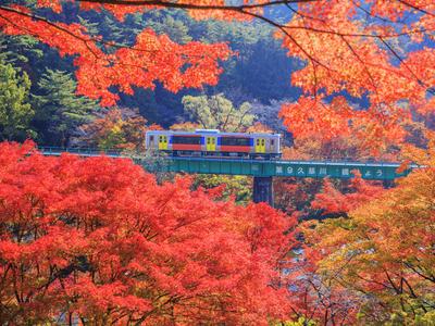 日本の紅葉名景めぐり