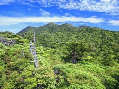 日本の世界遺産