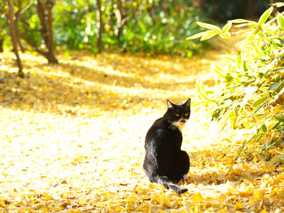 秋特集 - 豊かな秋