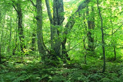世界の森(エコ)のすべて
