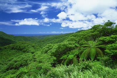 やんばるの森 (沖縄県)
